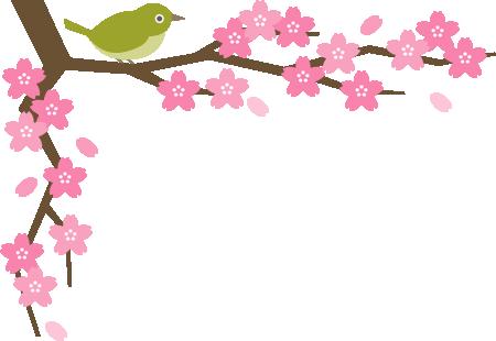 メジロと桜の木のコーナーフレーム飾り枠イラスト 無料フリーイラスト