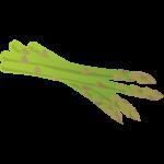 アスパラガス(グリーンアスパラ)のイラスト素材