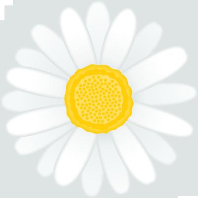 マーガレットの花のイラスト<白>