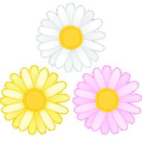 マーガレットの花のイラスト