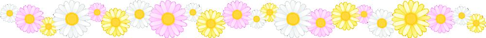 マーガレットの花のライン飾り罫線イラスト<小>