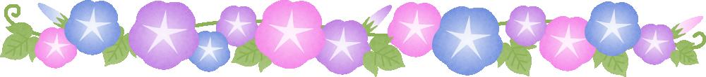朝顔(あさがお)の花のライン飾り罫線イラスト<大>