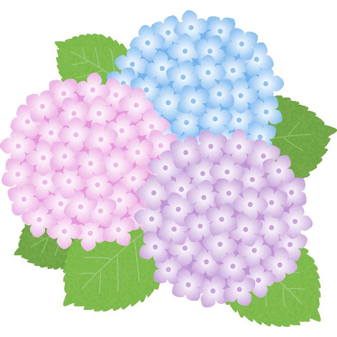 梅雨のイラスト紫陽花あじさいの花 無料フリーイラスト素材集