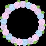 【梅雨のイラスト】紫陽花(あじさい)の花のリース風フレーム枠