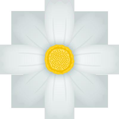 コスモスの花のイラスト<白>