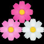 秋桜(コスモス)の花のイラスト素材
