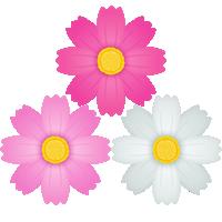 秋桜(コスモス)の花のイラスト